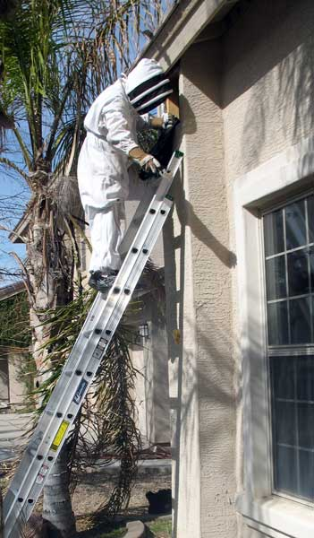 Honeycomb removal and repair service